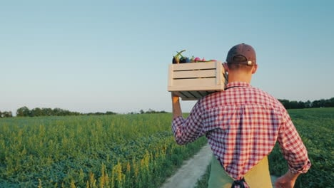 A-Young-Male-Farmer-Walks-Along-The-Field-With-A-Box-Of-Fresh-Vegetables-4k-Video