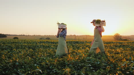 A-Family-Of-Farmers-Carries-Boxes-With-Vegetables-Across-The-Field-Organic-Farming-And-Healthy-Eatin