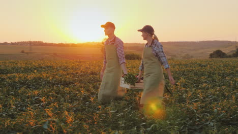 A-Woman-And-A-Man-Were-Carrying-A-Box-Of-Vegetables-Across-The-Field-Family-Farm
