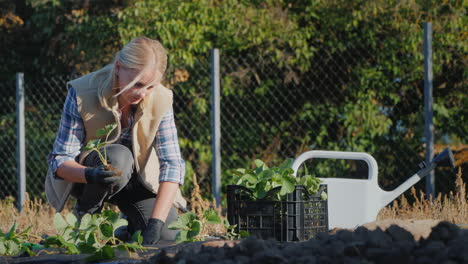 Hobbies-And-Outdoor-Work---Woman-Planting-Strawberries-In-The-Garden