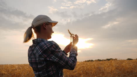 Woman-Farmer-Looks-At-Ears-Of-Wheat-Stands-In-A-Field-At-Sunset