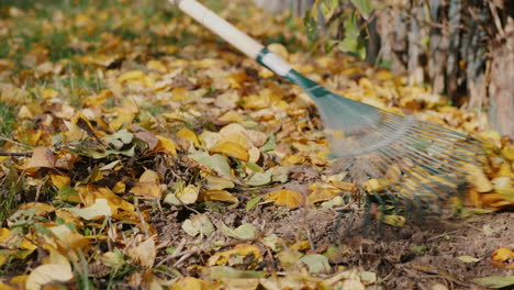 Rake-Raking-Fallen-Leaves-In-The-Garden