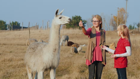 Mom-And-Daughter-Walk-In-The-Park-Feed-Cute-Alpacas