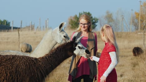 Mom-And-Children-Are-Fed-From-The-Hands-Of-Two-Alpacas-In-An-Ecopark