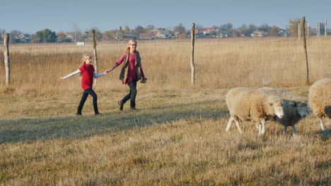 Middle-Aged-Woman-With-A-Child-Having-Fun-On-A-Farm---Running-After-A-Herd-Of-Sheep