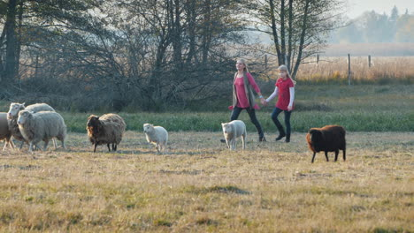 Mom-With-A-Child-Running-After-A-Herd-Of-Sheep-Having-Fun-Together