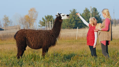 Mom-And-Daughter-Feed-Black-Alpaca-In-The-Park-Active-Woman-With-A-Child-On-A-Walk