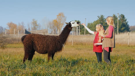 A-Woman-With-A-Child-Treats-Alpaca-Crackers-Good-Time-Together