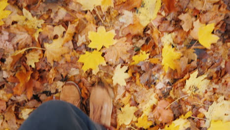 A-Woman-Walks-On-Fallen-Maple-Leaves-Only-Legs-Are-Visible-In-The-Frame