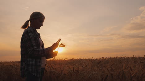 The-Silhouette-Of-A-Female-Farmer-Looks-At-The-Ears-Of-Wheat-Through-A-Magnifying-Glass-4k-Video