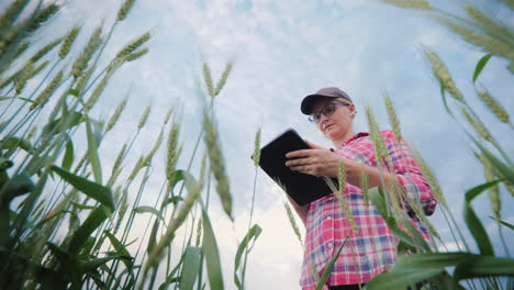The-Farmer-Works-In-A-Field-Of-Wheat-Uses-A-Tablet-Lower-View-Of-The-Shoot