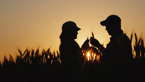 Two-Farmers-Work-On-A-Wheat-Field-Looking-At-The-Spikes-At-Sunset