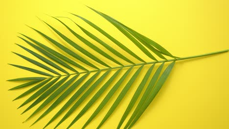 Green-fresh-tropical-palm-leaf-placed-on-yellow-background-Minimal-nature-Summer-Style-