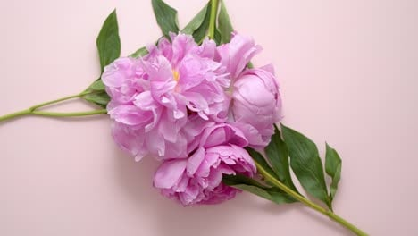A-bouquet-of-lovely-fresh-light-violet-peonies-on-a-pastel-pink-background-Flat-lay
