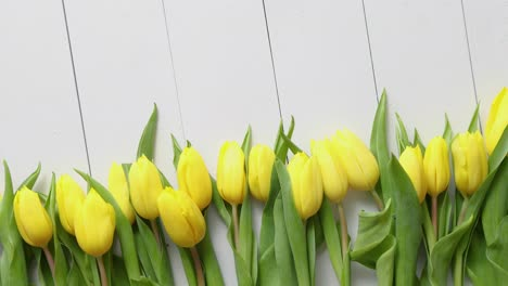 Row-of-fresh-Yellow-tulips-on-white-wooden-table