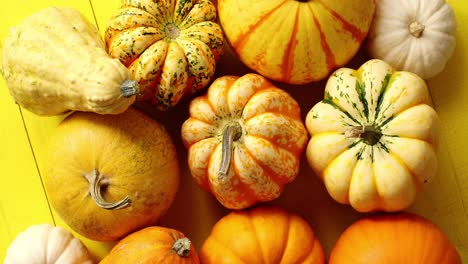 Pile-of-ripe-pumpkins-on-yellow