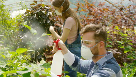 Male-and-female-professional-gardeners-spraying-fertilizer-on-plants