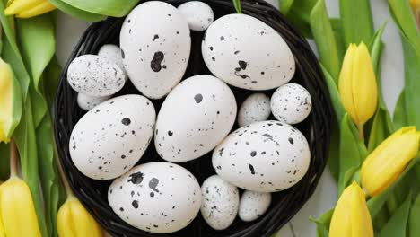 Beautiful-yellow-tulips-with-dotted-quail-and-chicken-eggs-in-nest-on-white