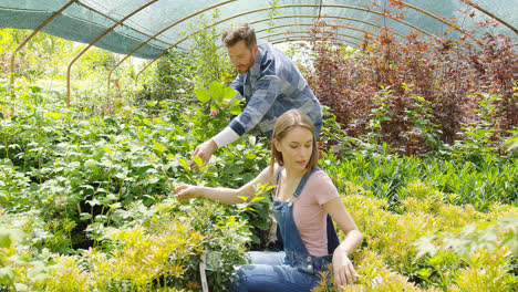 People-cutting-plants-in-hothouse