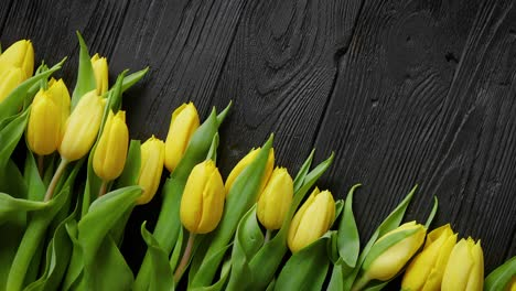 Beautiful-yellow-tulips-on-black-rustic-wooden-background-Top-view