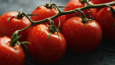 Ripe-cherry-tomatoes-with-drops-on-branch-