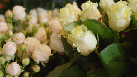 White-roses-in-close-up