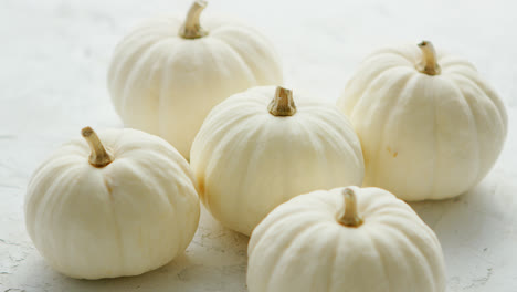 White-small-pumpkins-