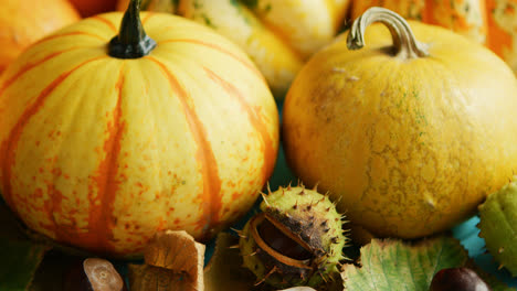 Yellow-pumpkins-laid-with-chestnut