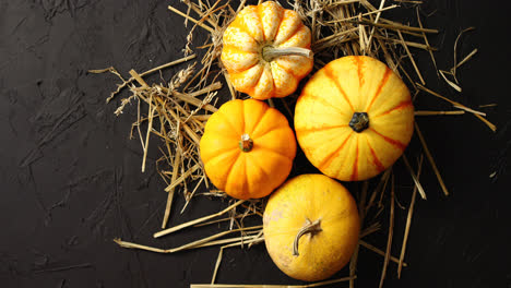 Yellow-pumpkins-laid-on-hay