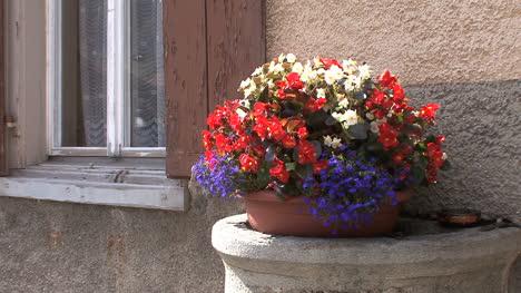 Switzerland-Spulgen-flowers