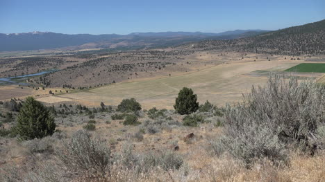 California-dry-landscape-with-cedar-tree-zooms-in