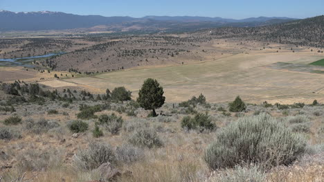California-dry-western-landscape-zoom-on-cedar-tree