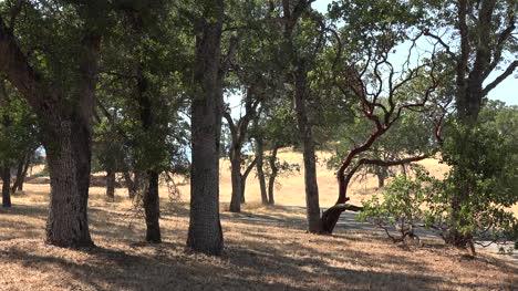 California-oak-and-pine-savanna