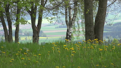 Germany-dandelions-and-view