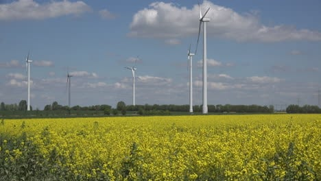Germany-field-of-rapeseed-and-wind-turbines