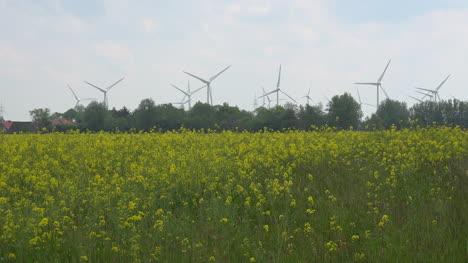 Germany-rapeseed-field-and-wind-turbines