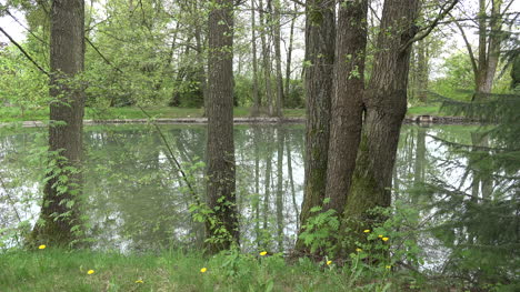 Germany-trees-by-pond-zooms-on-reflections