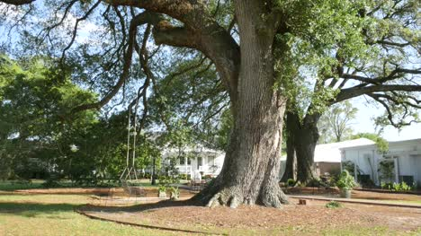 Louisiana-Nottaway-Plantation-oak-tree