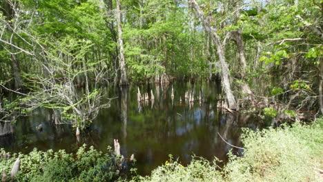 Pantano-De-Cipreses-De-Louisiana-Con-Rodillas