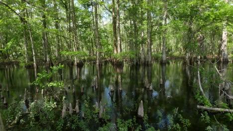 Pantano-De-Cipreses-De-Luisiana-Con-Reflejos