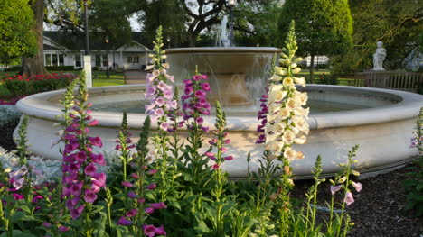 Louisiana-snapdragons-and-fountain