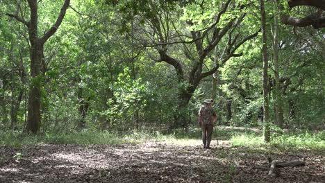 Bosque-De-Luisiana-Con-Gente