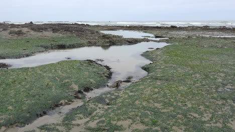 Oregon-Marine-Gardens-low-tide-with-sea-weed