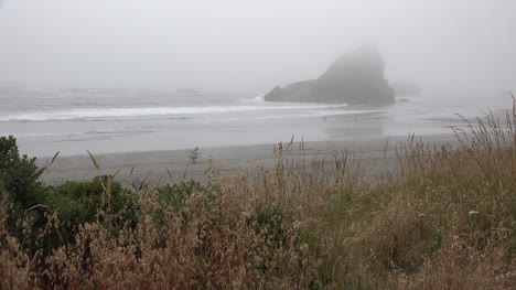 Oregon-blowing-grass-and-drifting-fog