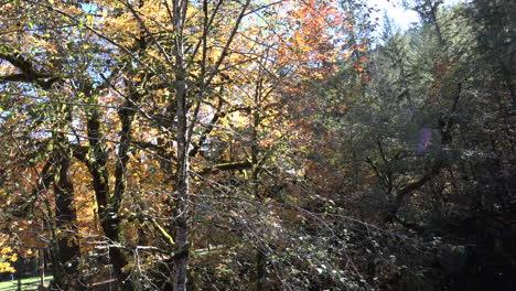 Oregon-Cayendo-Hojas-En-El-Bosque