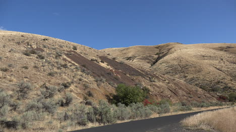 Oregon-red-leaves-amid-brown-hills