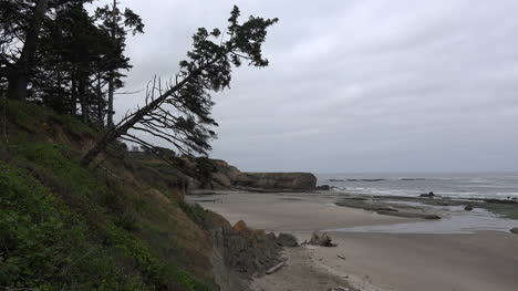 Oregon-tree-leans-over-Marine-Gardens