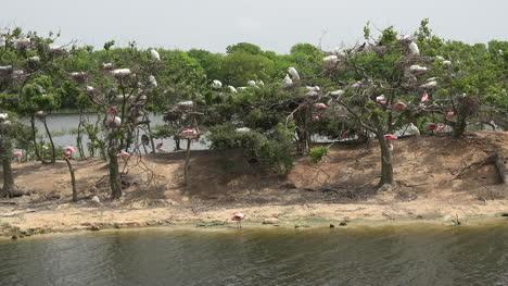 Texas-island-wading-birds-walking-nesting-and-flying