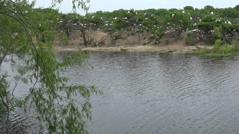 Texas-island-with-waterbird-rookery-pan
