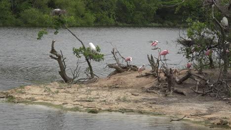 Texas-waterbird-rookery-on-island